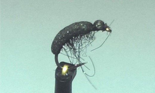 Mini coléoptère