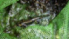 écluse de Quelennec, animation nature, pêche bretagne, peche bretagne, peche mouche bretagne, pêche mouche bretagne, pêche mouche, quelennec, quellenec, guidage pêche bretagne