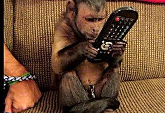 monkey%20tv_edited.jpg