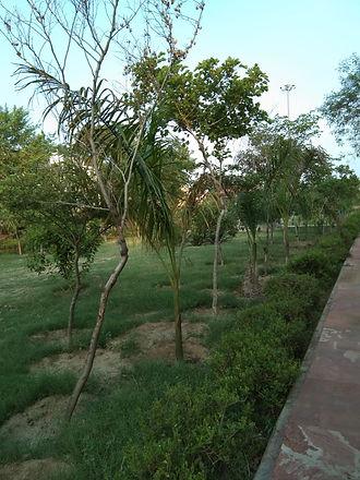 Unthoughtful Tree plantation at Eco Park