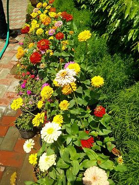 Pic 2 Vasant Vihar Club is blooming!.jpe
