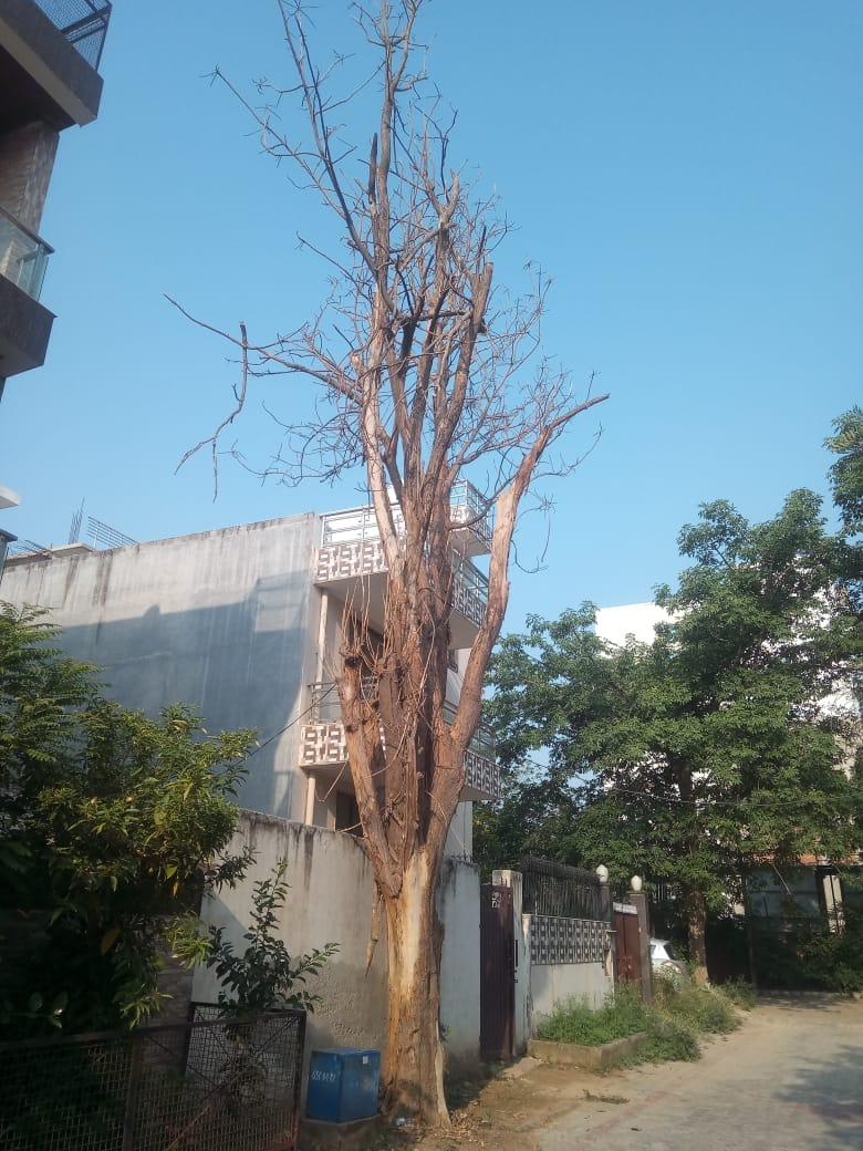 Dry Tree in South City 1.jpeg