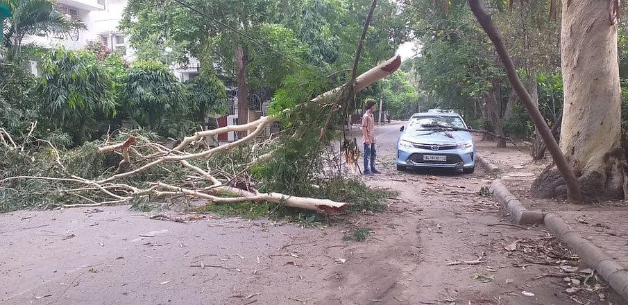 tree falls opp C 379.jpeg