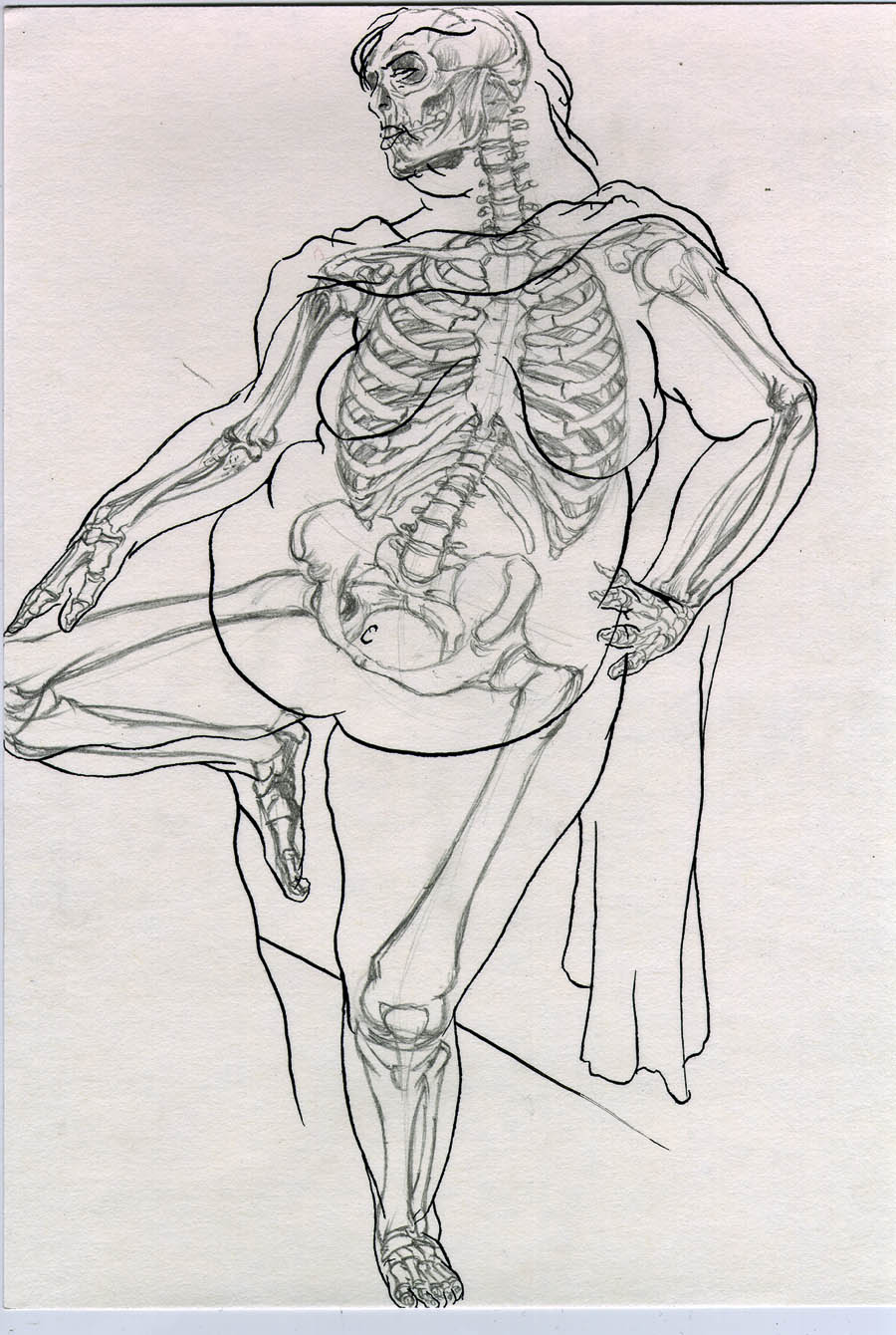 Anatomical Study of Aviva