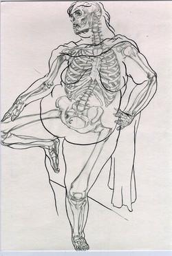 Anatomical Study of Aviva