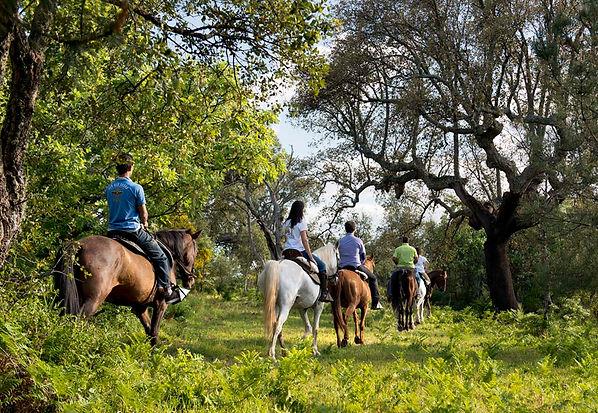 caballos-marvao-2.jpg