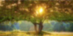 RadianHealthAcupuncture_HomePageImage_12