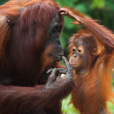 Reading the palms – why we choose not to use Palm Oil, ever.