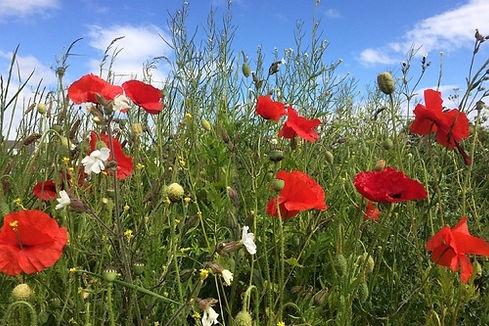 wildflower_meadow.jpg