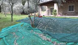 Lake Garda-Gardasee-Gargnano-Toscolano-B