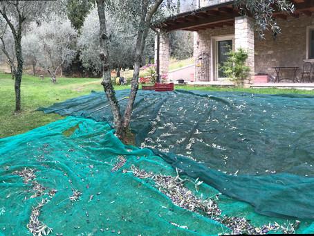 Olio Extravergine del B&B La cascata negli ulivi
