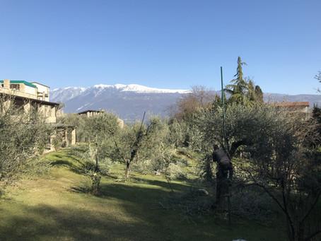 E' tempo di potatura al B&B La cascata negli ulivi - It's pruning time at the B & B