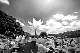 lotus-4127154_1920_edited.jpg