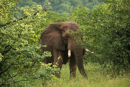 Landela Safaris - elephant