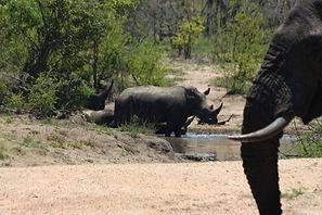 Landela Safaris- rhino & elephant