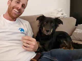 הצטברות מתח - המפתח להבנה של תוקפנות כלבים