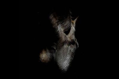 Mélina Jaouen Fourreau des Hongres photographie contemporaine Arles Brest Art