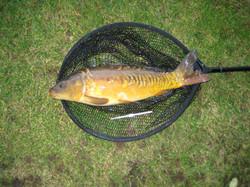 Coarse fishing in LincolnshiIMG_2820