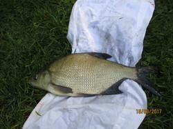 Coarse fishing in LincolnshiIMG_0607