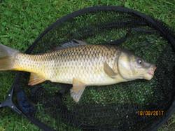 Coarse fishing in LincolnshiIMG_0608