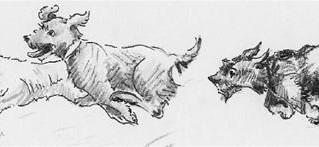 Tetford Terrier Racing 2017