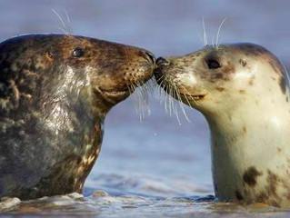 Donna Nook Grey Seal