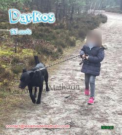 Darkos 04