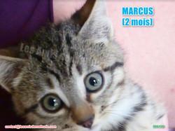 MARCUS modif 02