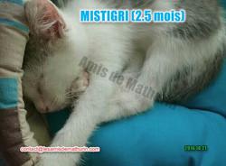 Mistigri 02