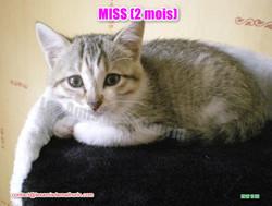 MISS modif 01