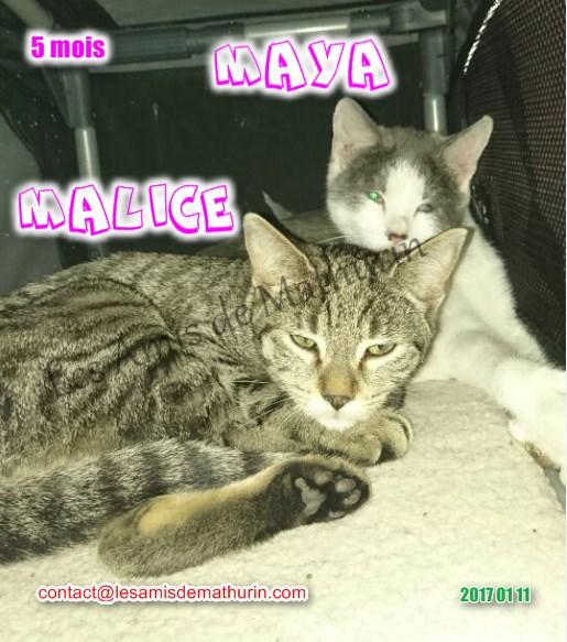 MAYA et MALICE 07