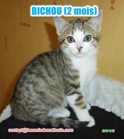 BICHOU modif 12