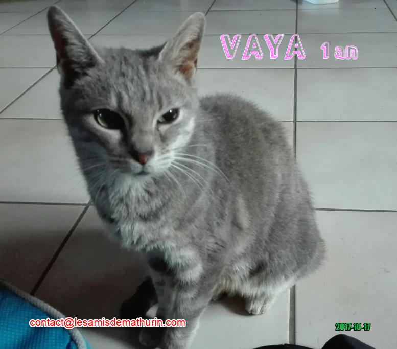 VAYA 01
