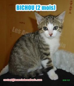 BICHOU modif 05