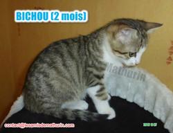 BICHOU modif 11