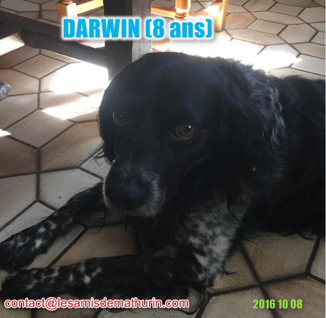 DARWIN modif4