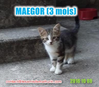MAEGORmodif2