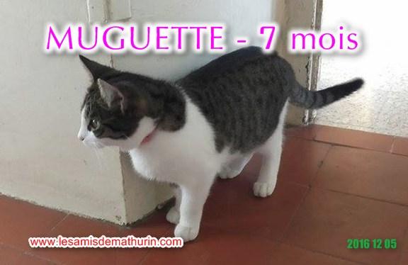 Muguette modif 02