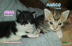 NINA et NARCO 01