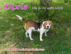 DIXIE 04