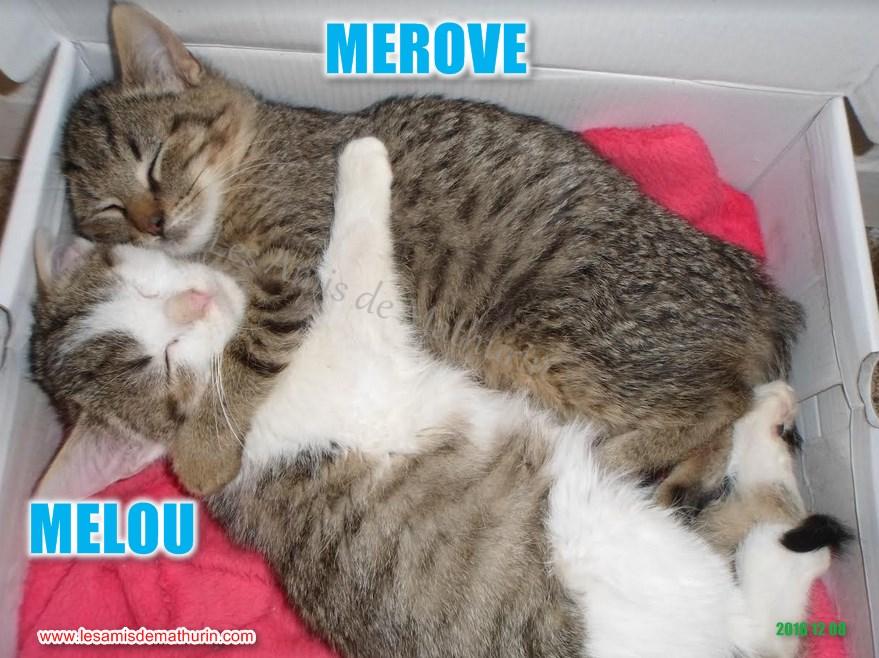 MELOU et MEROVE bis