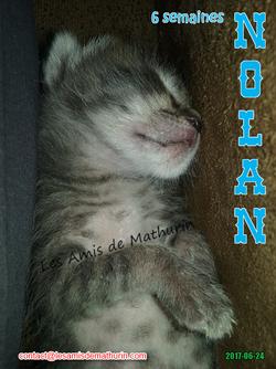 NOLAN 03