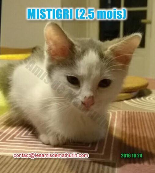 Mistigri 03