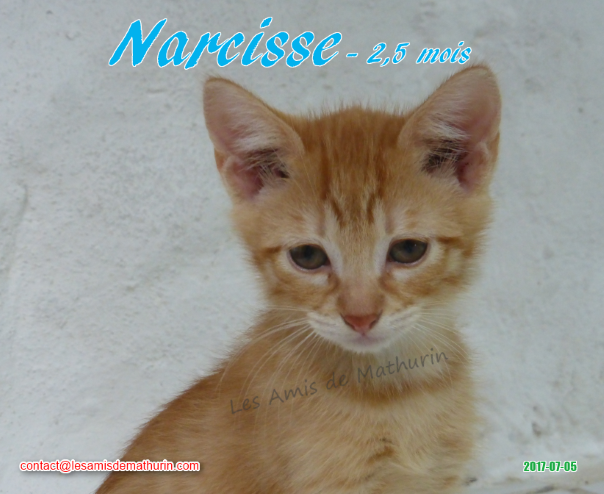NARCISSE 04