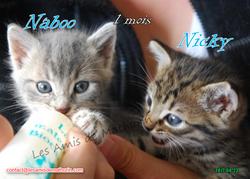 Naboo et Nicky 04
