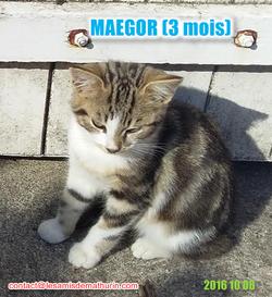MAEGORmodif3