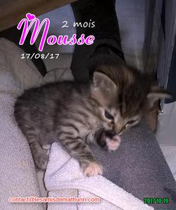 MOUSSE 01
