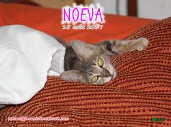 NOEVA 03