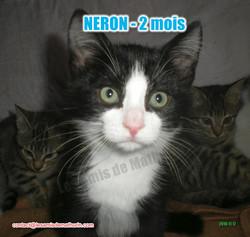 NERON modif 04
