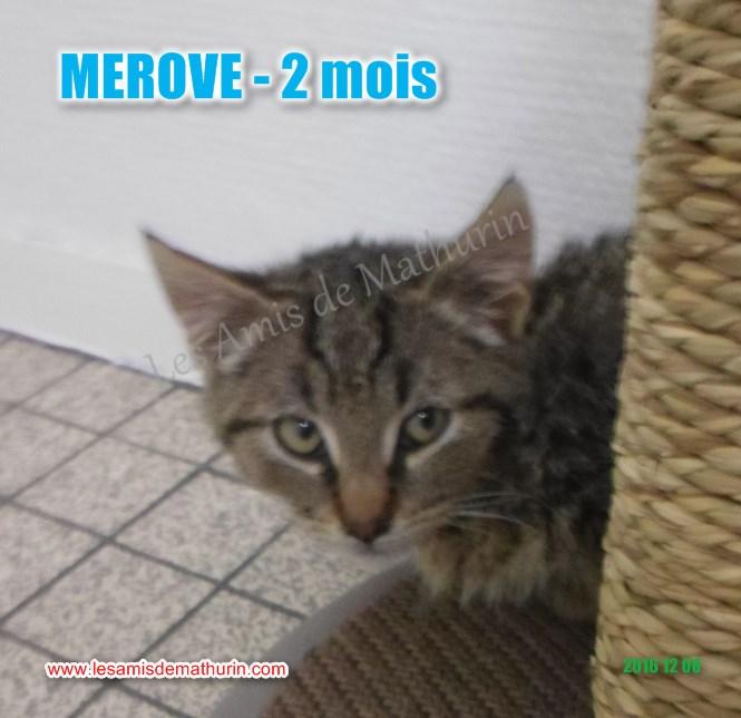 MEROVE modif 01